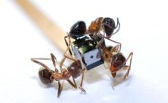 Ants gute Qualitat